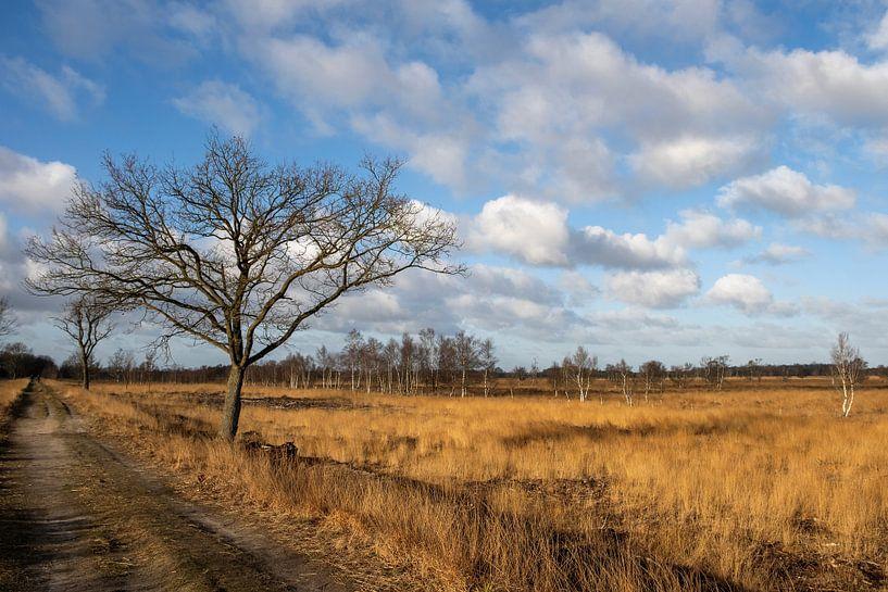 Bargerveen van Ilma Meijer