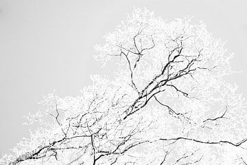 Zweige stilisiert in schwarz und weiß von Jan Fritz