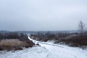 Sneeuw op de Veluwe