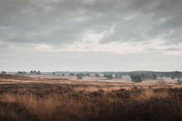 Das letzte Tageslicht   Die Veluwe-Heidelandschaft von Nanda van der Eijk