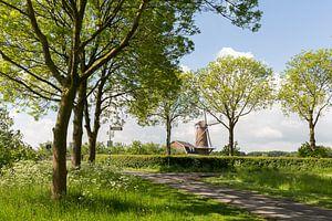 De Molen Rijn en Weert in Werkhoven van Marijke van Eijkeren
