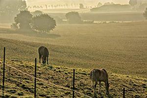 Zwei Pferde in einer nebligen Wiese von Manuel Declerck