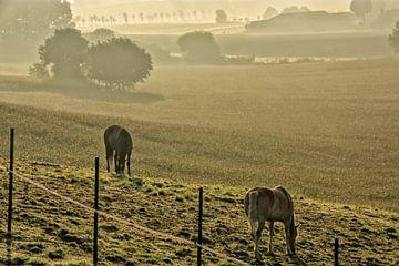 Twee paarden in een mistige weide van Manuel Declerck