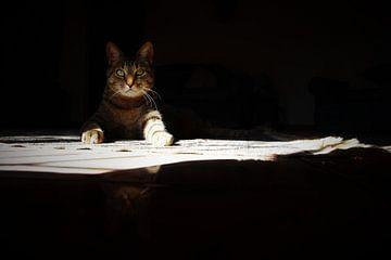 Kattenoog von Marije Zwart