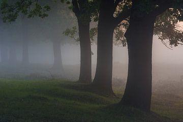 Stille Silhouetten  von Boris de Weijer