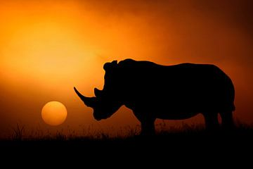 Rhino Sunrise, Mario Moreno van 1x