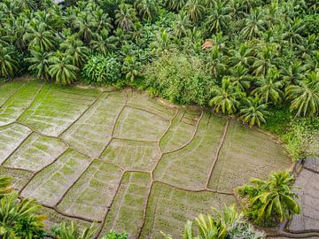 Reisfelder in Sri Lanka V von Nicole Nagtegaal