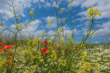 Veldbloemen von Moetwil en van Dijk - Fotografie