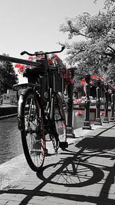 Rood Amsterdam