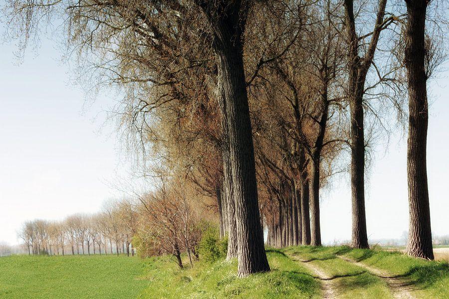 bomenrij langs dijkje van Yvonne Blokland