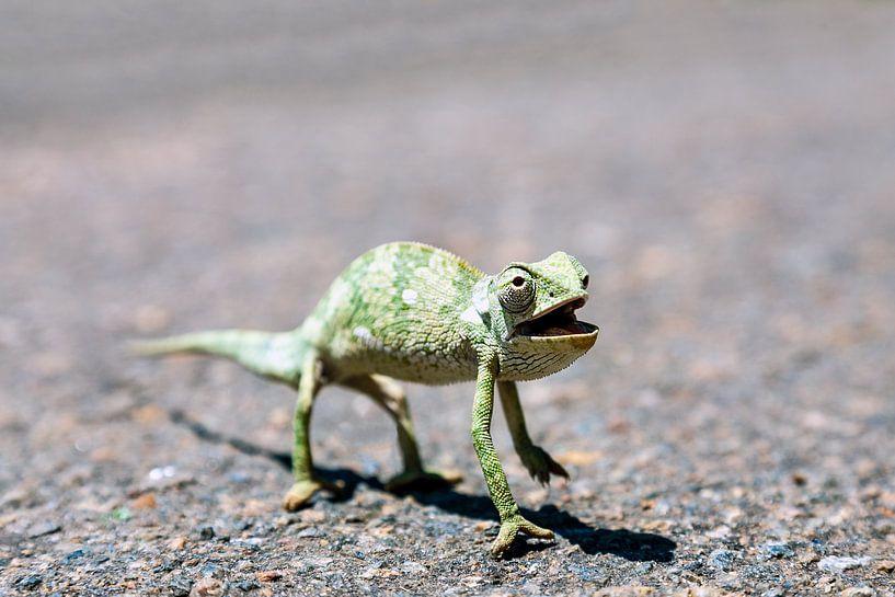 Een Kameleon steekt de straat over van Evert Jan Luchies