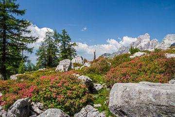 Alpenroosjes in bloei I van Coen Weesjes