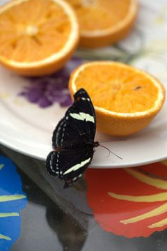 Vilnder met sinaasappels van Eric Verhoeven