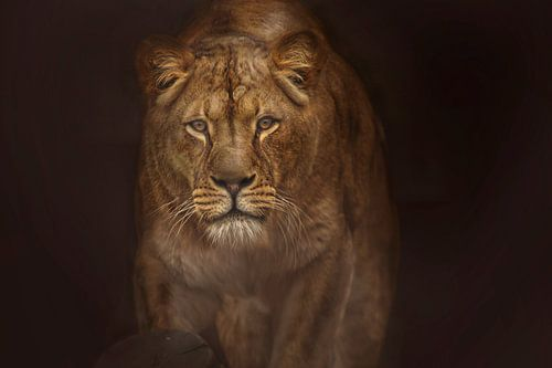 Löwin in Alarmbereitschaft von Laura Sanchez