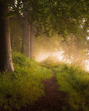 Vroege ochtendwandeling in het bos van Remco Piet