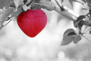 Rode appel van Michael Eckhoff