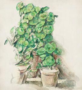 Cézanne, Geranien (ca. 1888-1890)