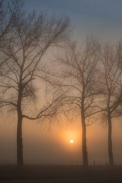 Mooie zonsopkomst in de mist bij de bomen van Moetwil en van Dijk - Fotografie