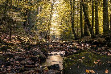 In het Monbachtal van Severin Frank Fotografie