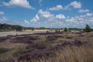 Heidelandschap op de Veluwe 01