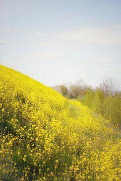 The fields of joy van Sonja Onstenk