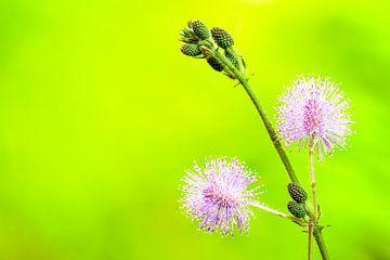 wilde bloemen von Marcel Derweduwen