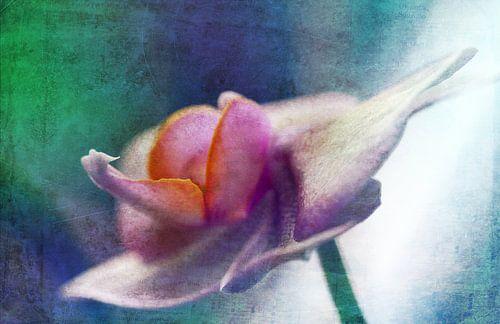 Orchidee2 van Rosi Lorz