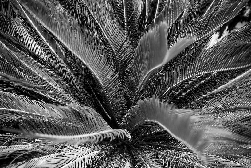 Palm met mooie lijnen zwart wit van Monique Tekstra-van Lochem