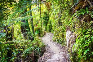Wandelpad door het bos, Nieuw Zeeland van