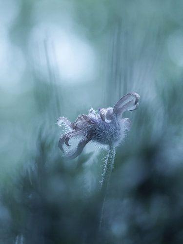 Frosted mystic flower von bird bee flower and tree