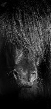 Pferd schwarz-weiß von Jeroen Mikkers