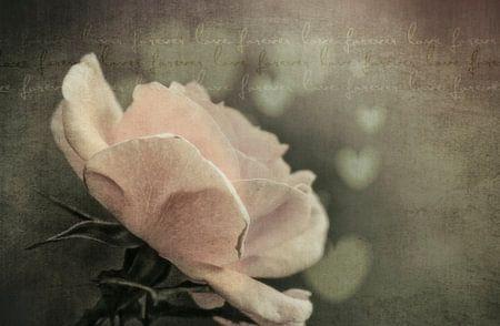 Roos met hartjes en tekst