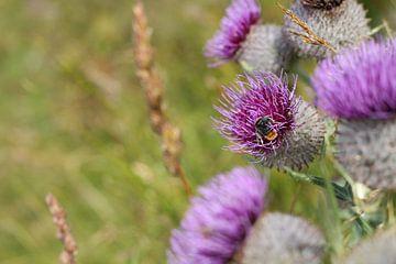Blume mit Biene von Nina Haverkamp