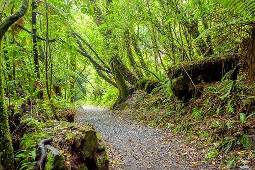 Bospad in Abel Tasman NP, Nieuw Zeeland