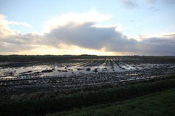 Texel Landschap 054 van Starworks Lien van der Star