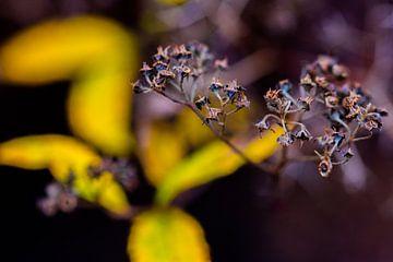 Pflanze mit gelbem Hintergrund von Dianne Peeters