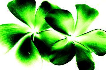 Green twins sur Ernst van Voorst