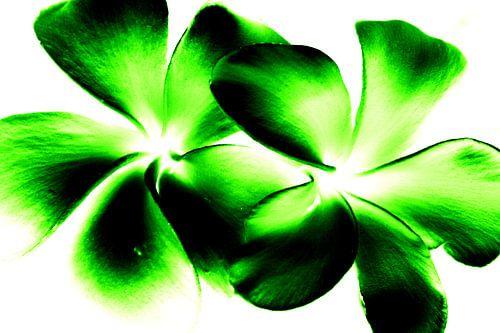 Green twins van
