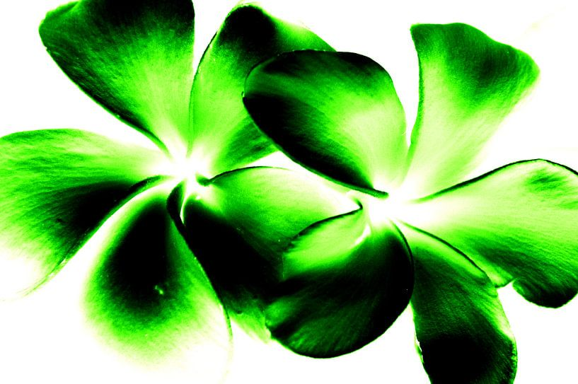 Green twins van Ernst van Voorst