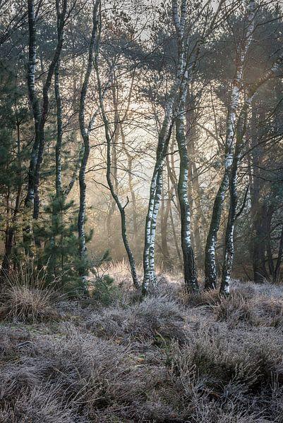 Wintermorgen van Anoeska van Slegtenhorst