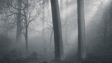 WALD-TOR von Algon Photography