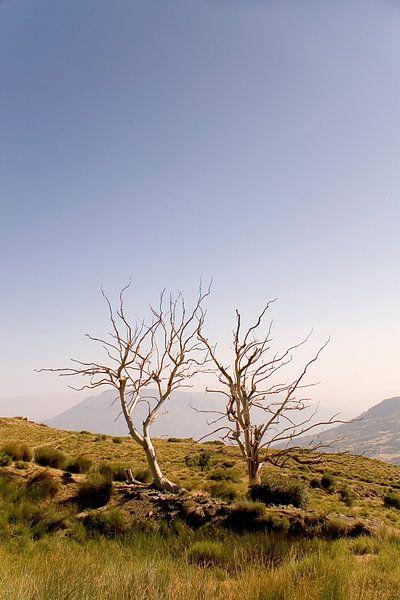 Two Lonely Trees van Studio voor Beeld