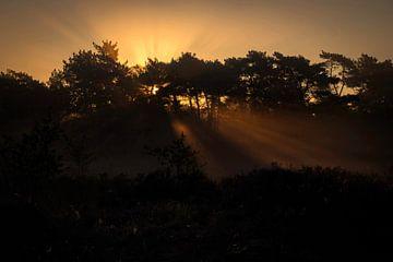 Sonnenstrahlen am Morgen von Esther Bax