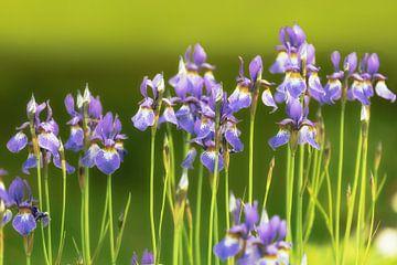 Blumen von Maikel Brands