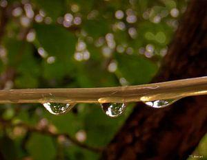 Regen druppels