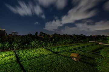 Rijstveld Bali in de nacht van Juliette Laurant