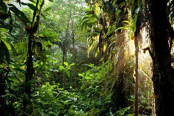 Sonnenlicht im Dschungel von Costa Rica von Peter Schickert