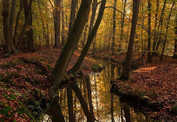 Overhangende bomen van Joris Pannemans - Loris Photography