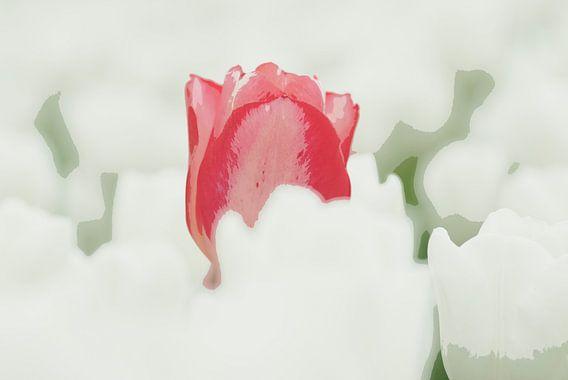 Rode tulp in een wit veld van Franke de Jong