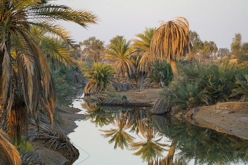Palmenoase in ochtendlicht